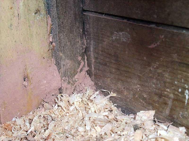 Stalosan applied into coop corners